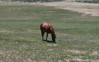 54 Acre Horse Lover's Dream!
