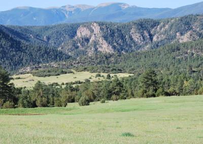 Wild Turkey Ranch 014