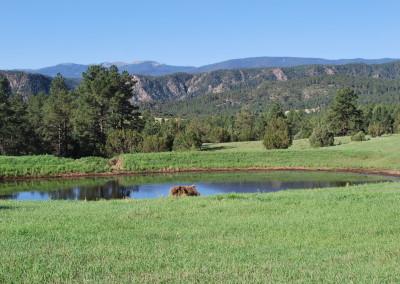 Wild Turkey Ranch 022