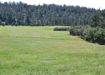 Wild Turkey Ranch 114