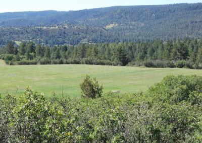 Wild Turkey Ranch 126
