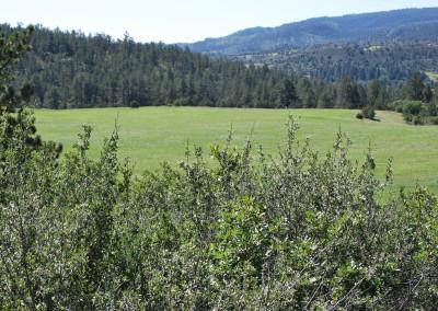 Wild Turkey Ranch 127
