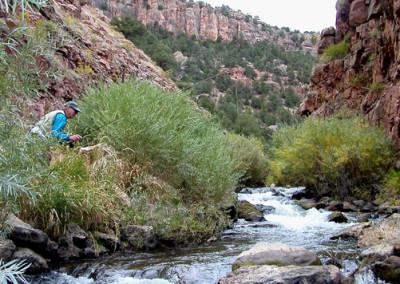 Four Mile Creek - Fishing