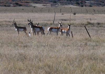 Meadowbrook-Antelope