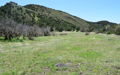 Forbes Canyon Ranch – $695 per Acre!