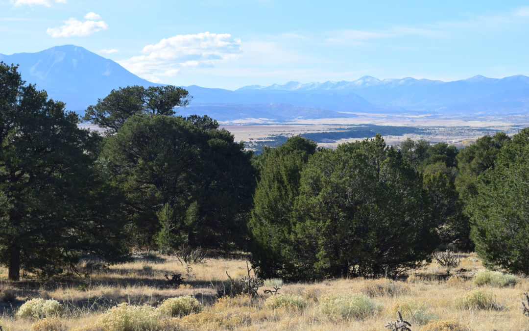 Hogback Ridge Ranch Spectacular Views