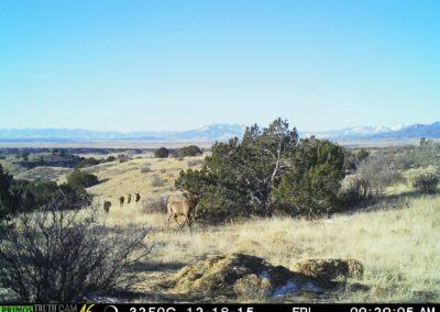 Meadowbrook Elk 5