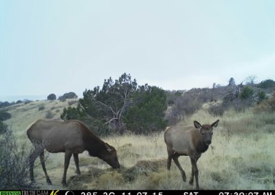 Meadowbrook Elk 7