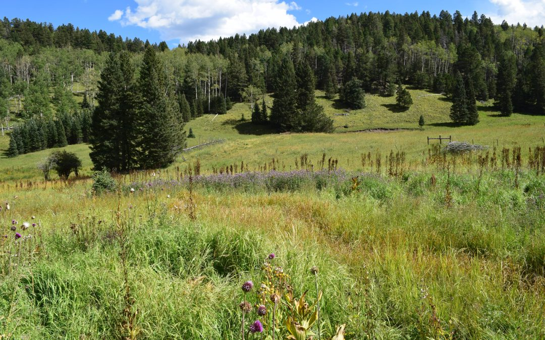 """Bugling Elk Ranch – """"Trophy Property of the Month"""""""