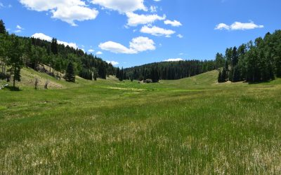 Bugling Elk Ranch